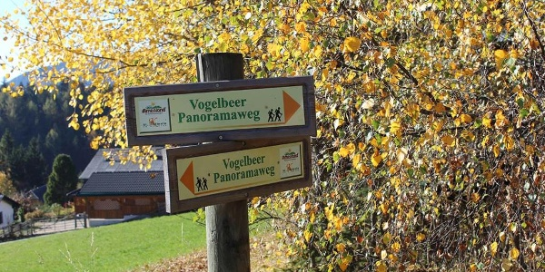 Vogelbeer Panoramaweg