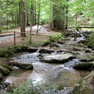 Fresenbach bei der Mühle im Märchenwald