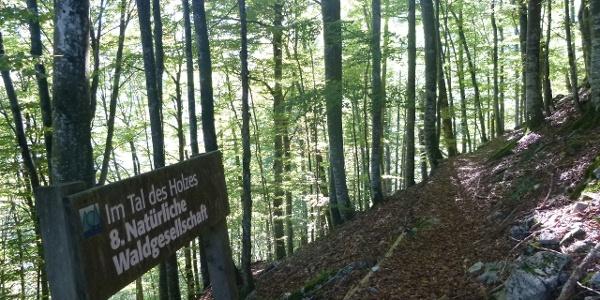 In den heißen Sommermonaten bietet der Wald angenehme Kühle