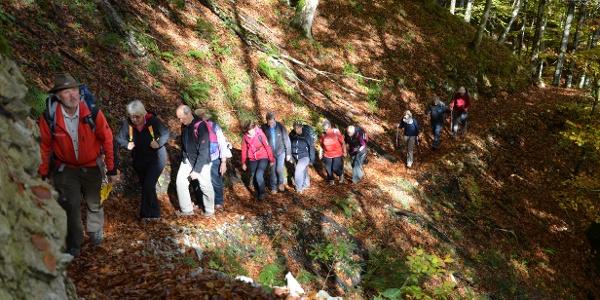 Herbstwanderung am Buchensteig