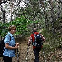 Auf dem Weg durch Kiefernwald