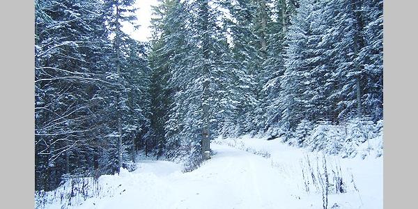 Natur pur: Wir gelangen während unserer Tour durch tiefen Wald.