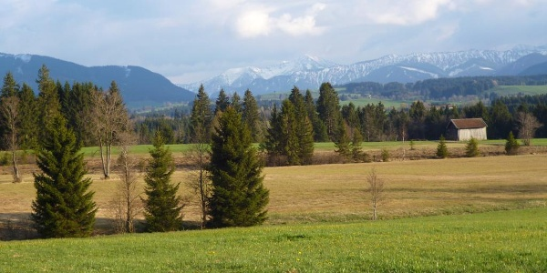 Traumhafter Blick über die saftig grünen Wiesen hinweg auf die Alpenkette.