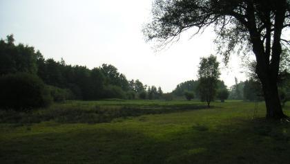 Das Naturschutzgebiet Döpe wirkt stellenweise wie ein Landschaftspark.