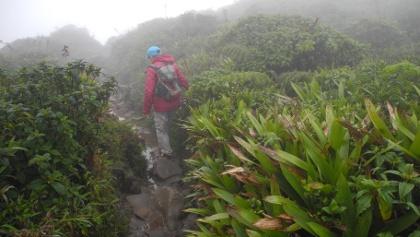 An der Vegetation erkennt man auch, dass im oberen Teil des Anstieges im Schnitt 25l Regen jeden Tag pro Quadratmeter fallen!