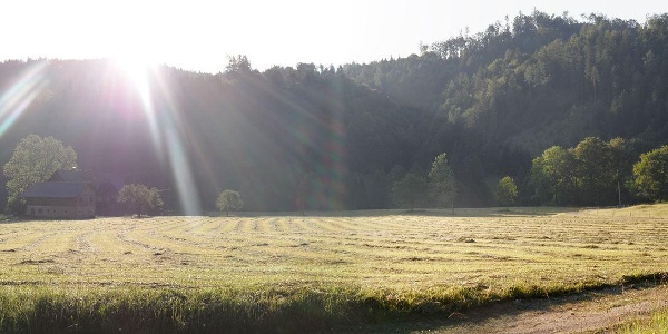 Morgenstimmung im Brunnental