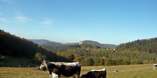 Blick vom Gimbelhof zur Burgruine Fleckenstein