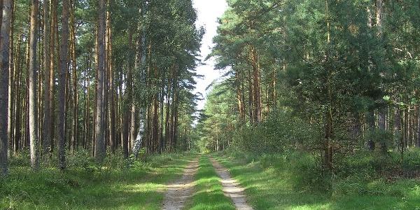 Auf schattigen Wegen durch die Rostocker Heide, ein großes, abwechslungreiches Waldgebiet.