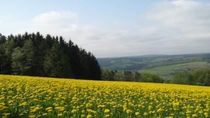 Blick vom Stackenberg