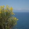 Am Punta Tresino