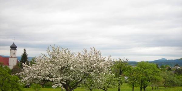 Blick auf Roßwangen. Im Hintergrund die Burg Hohenzollern.