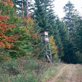 Das bunte Farbenspiel der Blätter macht diese Tour im Herbst zum Genuss.