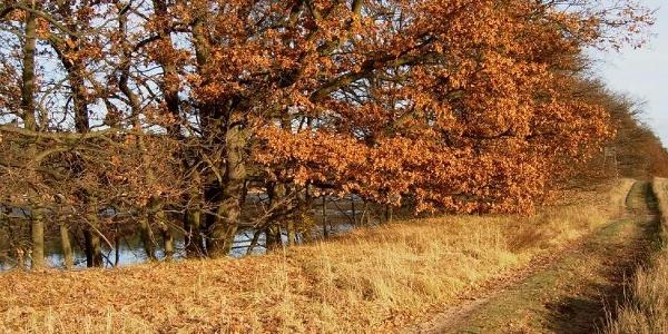 Bei Ahlimbsmühle steigt das Ufer des Lübbesees steil an und ermöglicht gute Ausblicke.