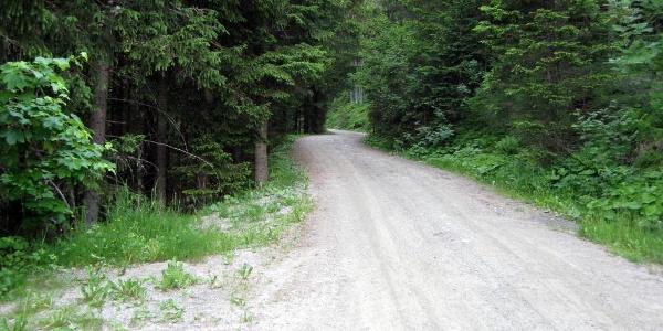 Auf sehr guter Forststraße geht es stetig mäßig steil aufwärts. Flachpassagen gibt es kaum.