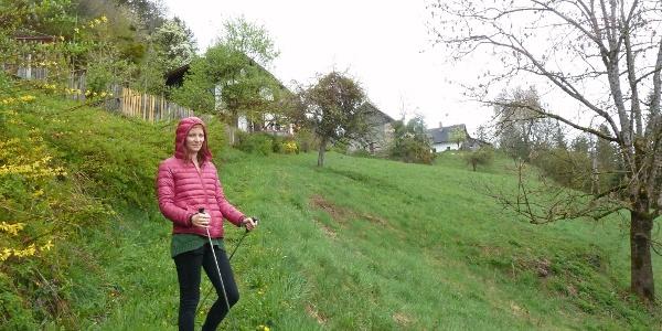 17-Kräuter-Weg nach Greifenburg
