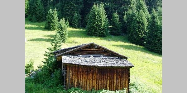 Waldzuwachs