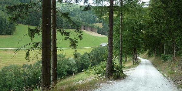 Strecke kurz vor  Piregg Richtung  Birkfeld