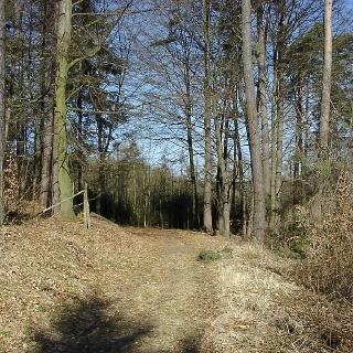 Wanderweg am Aussichtspunkt 7