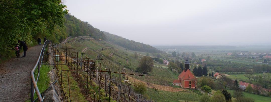 Der königlich-sächsische Weinberg