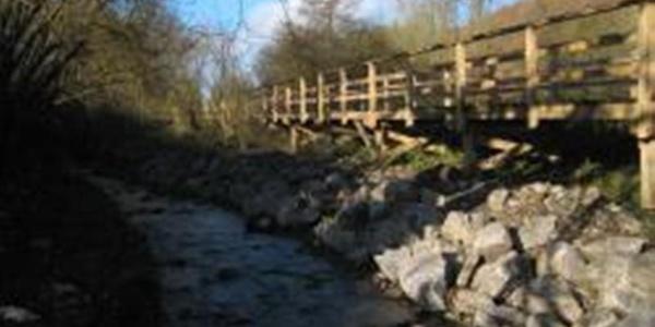 Pionierbrücke über das Feuchtbiotop
