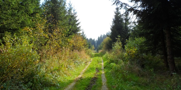 Der Salaberger Wald