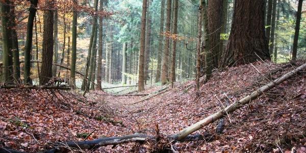 Landwehr im Lütmarser Holz