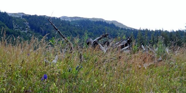 Naturpark Ötscher-Tormäuer