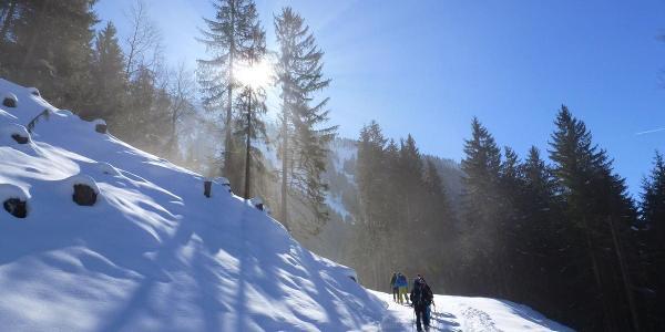 Auf dem Waldweg, links hinter der Tanne ist der Grüntenturm zu sehen