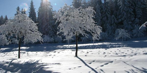 Naturpark Hohe Wand Winterwanderung Tierische Begegnungen