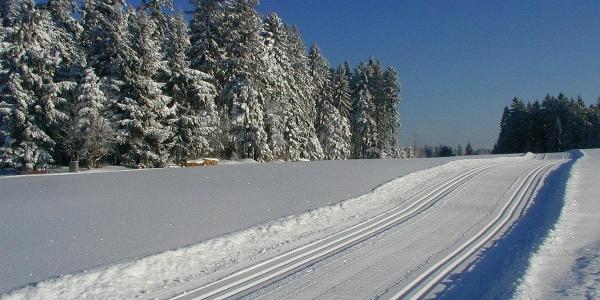 Loipen in herrlicher Winterlandschaft
