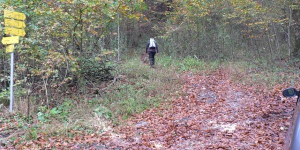 Vom Parkplatz führt der Wanderweg in den Wald