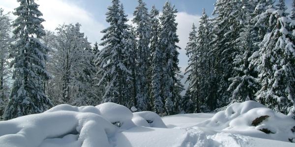Winter in Bischofswiesen