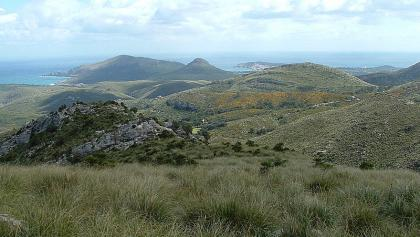 Vegetation im Parc Natural de la Península de Llevant.