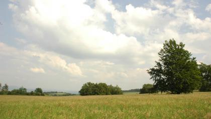 Feld in Thüringen
