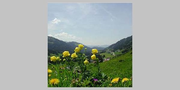 Blumen zieren unsern Weg.
