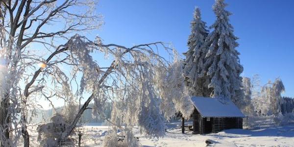 winter Rahrbruch