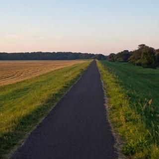 Der Elberadweg zwischen Magdeburg und Randau