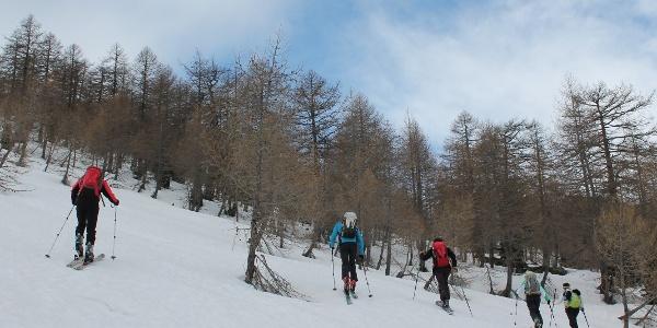 Aufstieg durch den Lärchenwald