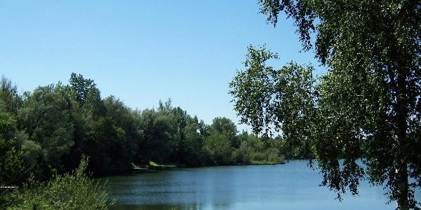 Kirchdorfer Waldsee