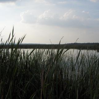 Tief im Moor bieten sich weitere schöne Ausblicke.