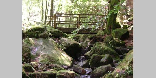 Silberbachtal im Teutoburger Wald