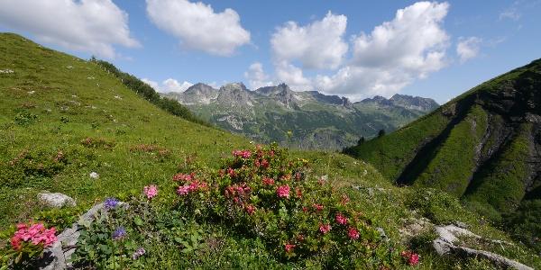 Alpenrosen auf dem Weg zum Mutzentobel