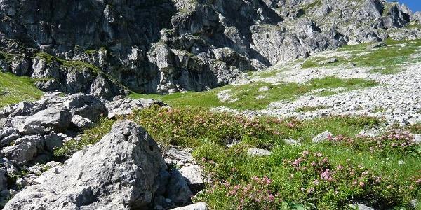 Alpenrosenhang