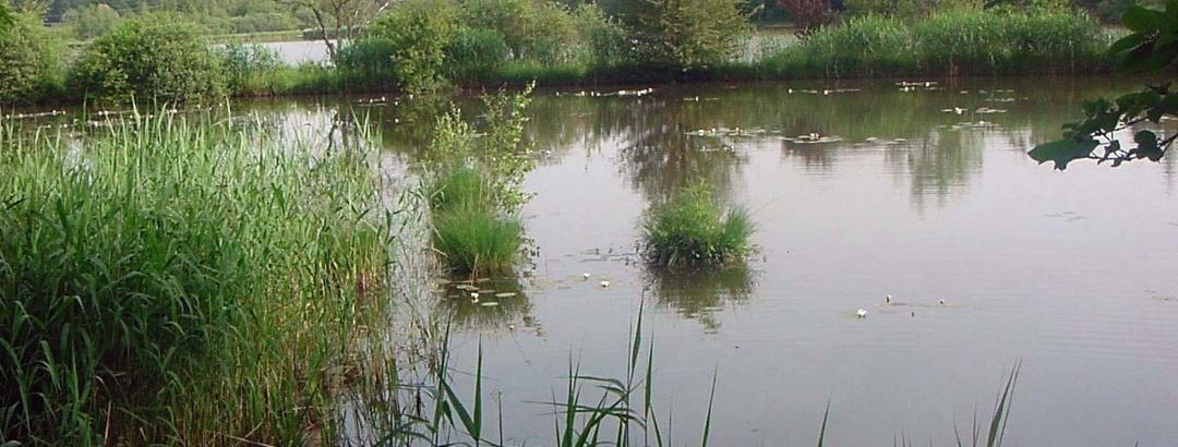 Wasserspiegelung im Deixelfurter See.