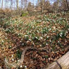 ein Ausschnitt Blütenteppich