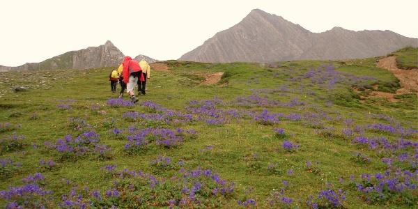 Blumenrinne (Geranien)  2770m bis 2820m