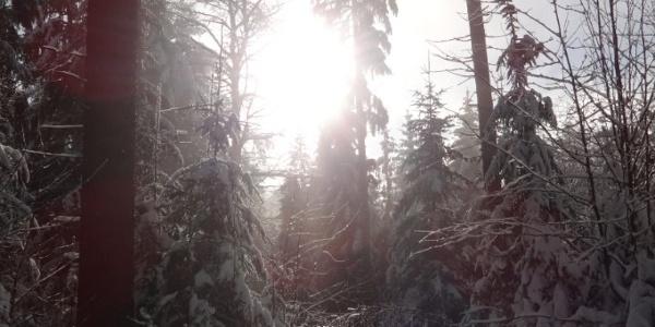 verschneiter Baierweg