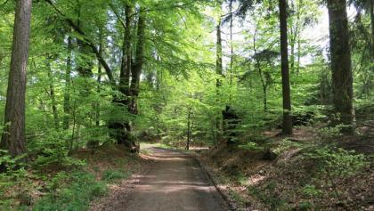 "Das ""Buchentor"" bei Arnsberg-Moosfelde"