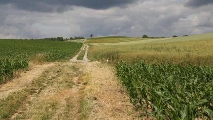 Feldweg Richtung Steinfeld