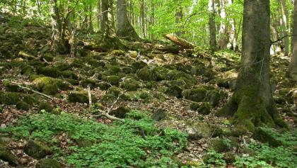 Blockschuttwald am Großen Stein